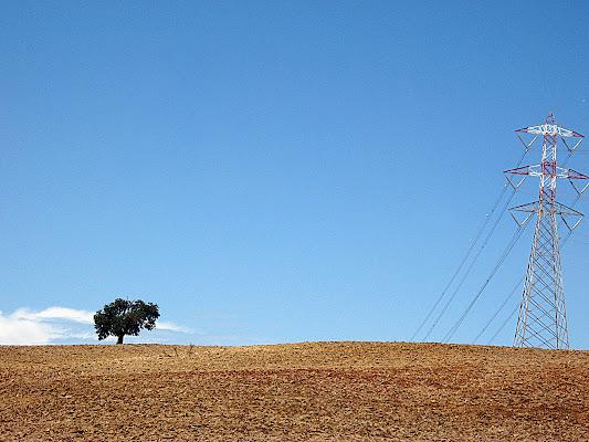 alberi solitari di nicoletta lindor