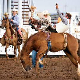 Ride em by Scott Thomas - Sports & Fitness Rodeo/Bull Riding ( cowboy, horse.bronc, sports, rodeo )