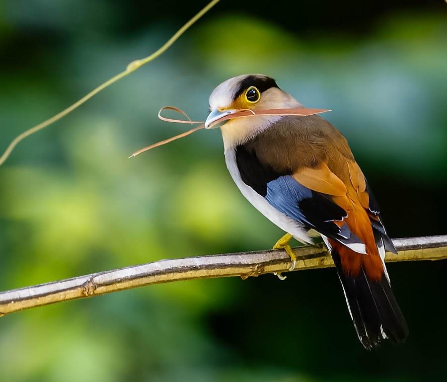 Colorful by Kuppusamy Ramesh - Animals Birds