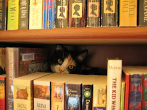 Photo: Elisa, our book kitty.  We had to push all the books back so she wouldn't hide behind them.