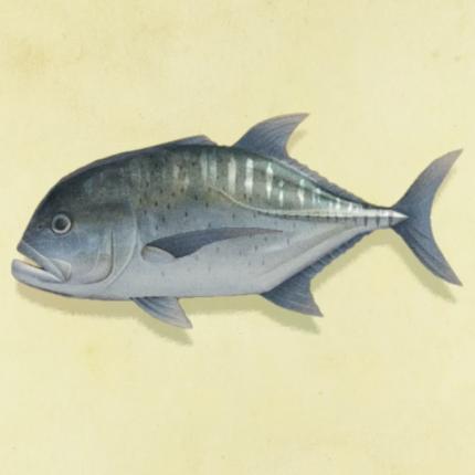 あつ森 7月 魚 虫
