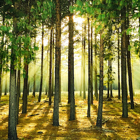 by Banie du Randt - Landscapes Forests
