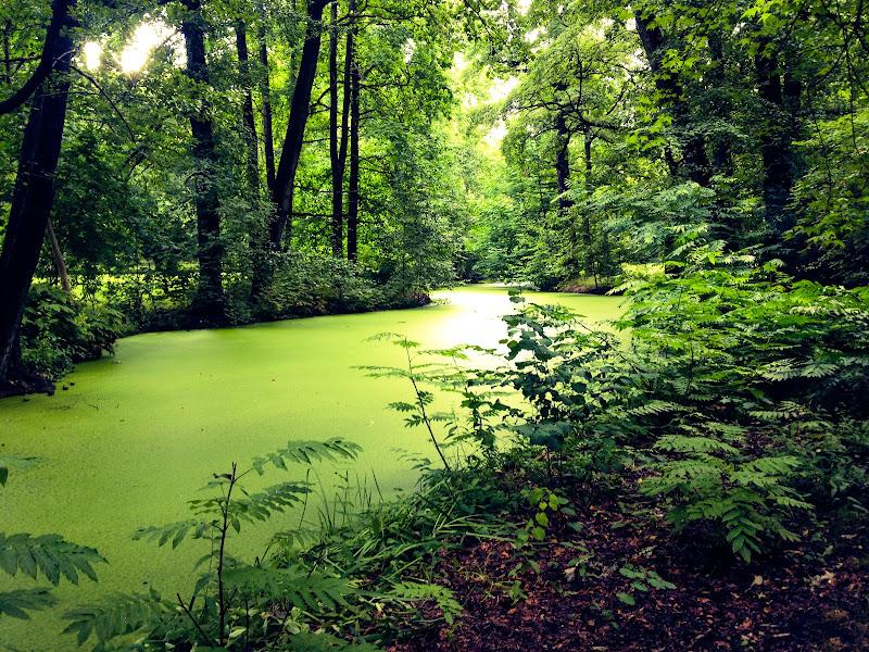 Tiergarten di PietroC