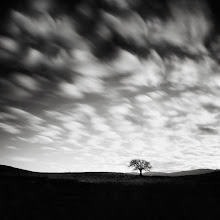 """Photo: """"The Poet's Apprentice"""" - http://www.createwithlightphotography.com  Available to view on 500px: http://500px.com/photo/24783183  On rare occasions you meet someone by happenstance that has a profound effect on your life. +Nathan Wirth is one of those people and my life is all the richer for it. Nathan took me under his wing as his Long Exposure apprentice in early 2011 and has played an instrumental role in the development of my art. His limitless patience, support, constructive feedback and friendship have been lifechanging for me and I cannot truly express my gratitude. Than you again my dear friend, you are a beautiful soul and this humble offering is dedicated to you!!  This image was captured on the evening before the +A Slice of Time - SF Bay Photowalk 2013started. I spent an amazing evening on the side of this hill in Novato with my great friends +John Kosmopoulos , +Athena Careyand +Cameron Siguenza, staring in wonderment at Nathan's """"Poet's Tree"""". What a treat that was!! It was great to finally meet John, Athena and Cameron in person...you guys (and gal) are the best!!  The techie Stuff:  ISO: 125 Aperture: f/8 Exposure: 75 seconds Focal Length: 24mm Filters: Lee Big Stopper 10 stop ND filter, Lee 3 and 1 stop hard grad ND filter  This is my contribution to the #MinimalMonday theme, kindly curated by +Olivier Du Tré, the #MonochromeMonday theme, kindly curated by +Charles Lupica , +Bill Wood , +Jerry Johnson and +Hans Berendsen , the #MoodyMonday theme curated by +Philip Daly , the #landscapephotography theme run by +Bill Wood , the #FineArtPls theme, curated by the lovely +Marina Chen and +FineArtPls , the #BWFineArt theme, curated by the amazing Mr +Joel Tjintjelaar and +Black and White Fine Art Photography Gallery , #SquaresAreSassy curated by my dear friend, +Nathan Wirth , my awesome muse, friend, inspiration and supporter +dene' miles and finally the #PlusPhotoExtract theme, run by +Jarek Klimek  All thoughts and comments welcome.  Please visi"""