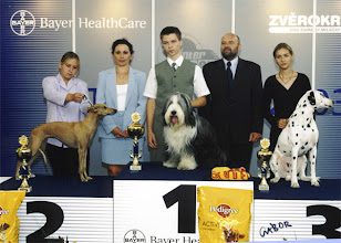 Photo: INT Show Brno, CZ 1st place in competition BEST JUNIOR HANDLER OF INT SHOW BRNO/CZ (winner of 1st category and winner of 2nd category) judge: Mrs. V. Staviarska/SK