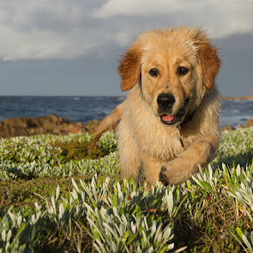 Tessa at the sea by Francois Retief - Animals - Dogs Running