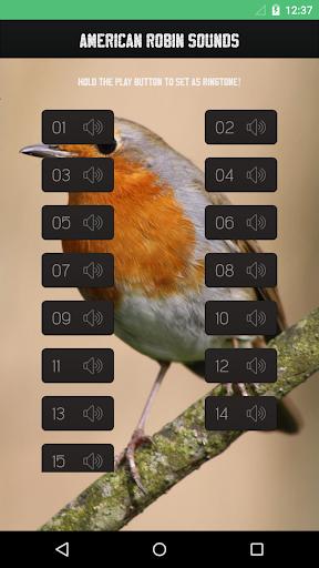 American robin bird sounds