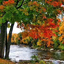 Fall foliage along the riverbank  by Margie Troyer - Nature Up Close Trees & Bushes (  )