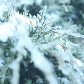 icy  by Matthew Donathan - Nature Up Close Other Natural Objects ( nature, cannon, winter, ice, landscaping,  )