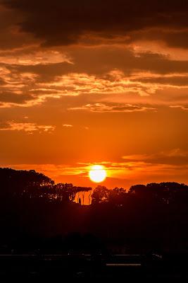 """""""Come pini di Roma, la vita non li spezza... Questa notte è ancora nostra"""" di Jiggly"""