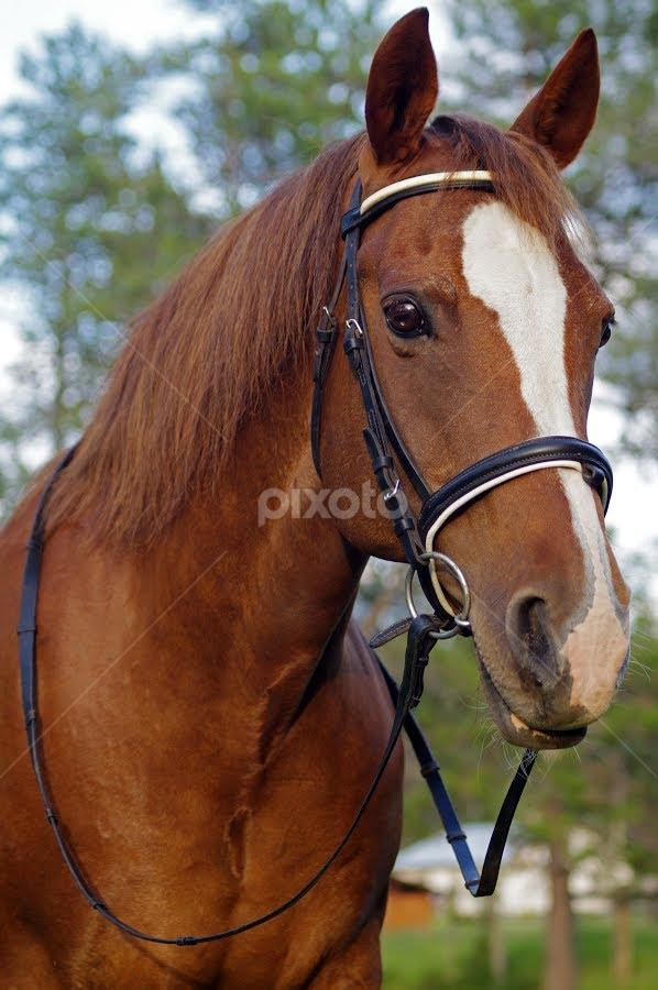 Beauty | Horses | Animals !!! | Pixoto