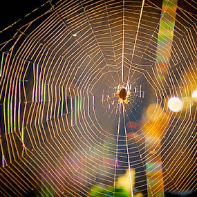 Web Master by Phil Clarkstone - Nature Up Close Webs