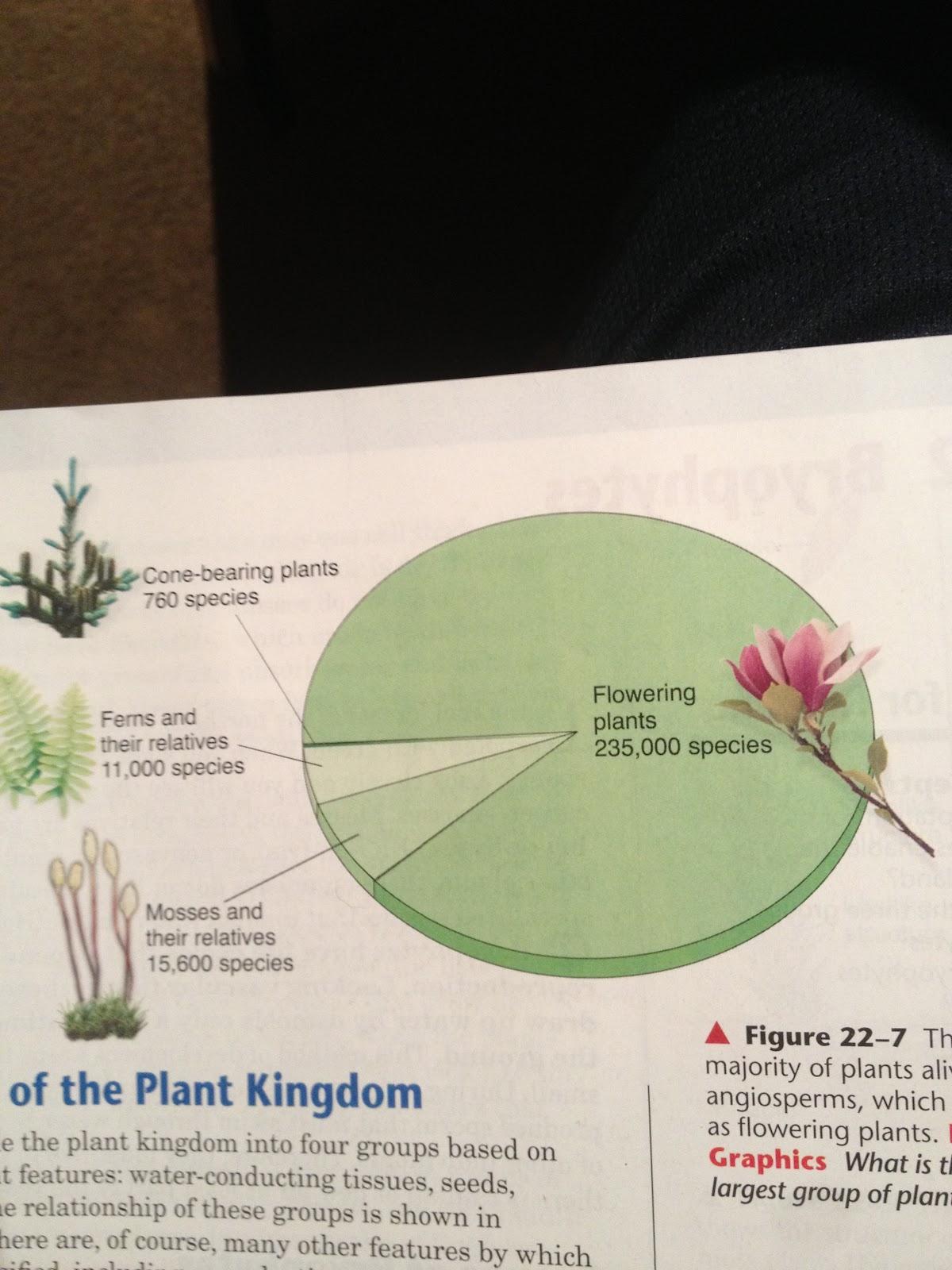 Daniel T Bio 20 Blog Plantae Wiring Diagram