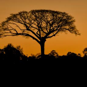 River Tree by Fico Stein Montagne - Nature Up Close Trees & Bushes ( orange, peru, tree, jungle, silhouette, sunset, nikon d7000, shadows,  )