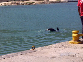 Photo: A friendly Kalk Bay Seal