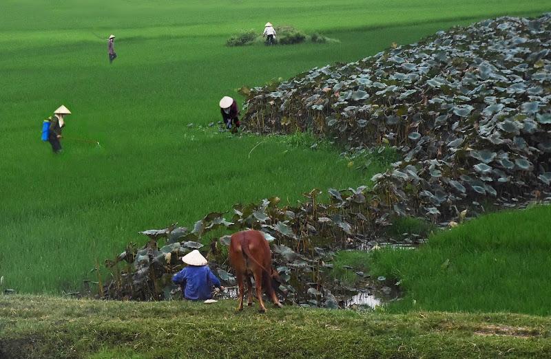 Al lavoro tra riso e fiori di loto di BASTET-Clara