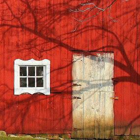 Shadow On The Barn by Dennis Granzow - Abstract Fine Art ( red, ohio, texture, barn door, tree shadow )