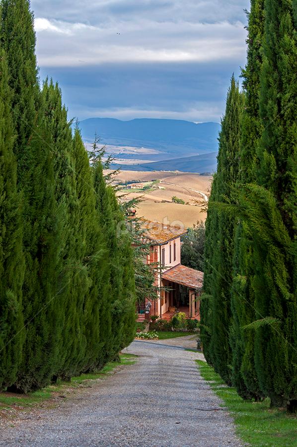 Road by Andrej Tarfila - City,  Street & Park  Neighborhoods ( field, tuscany, sky, villa, road, landmark, travel,  )