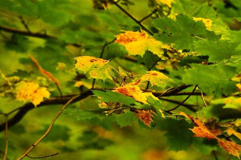 autumn is coming ♥ di ph.patriziapoggetti