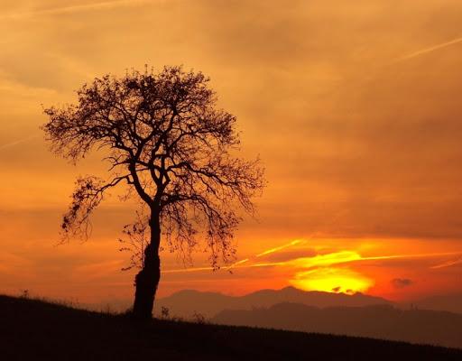 Osservando il tramonto... di samy_c