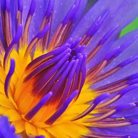 by Chatchai Lakamankong - Nature Up Close Flowers - 2011-2013