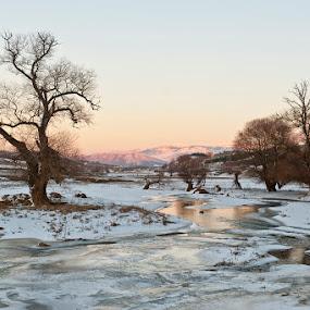 Frozen by Nikos Koutoulas - Landscapes Prairies, Meadows & Fields ( frozen tree kozani lake ice, pwcwinter, black and white, greece, ελλάδα, κοζάνη )