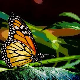 Butterfly Artsy by Joan Sharp - Digital Art Animals ( green background, resting, butterfly, digital art, monarch )