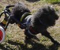 C:UsersuserDesktopTomomi2カット済み小型犬S2輪275.jpg