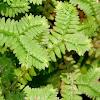 Unusual Plant