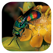 App Icon for Insects of South Africa App in Czech Republic Google Play Store