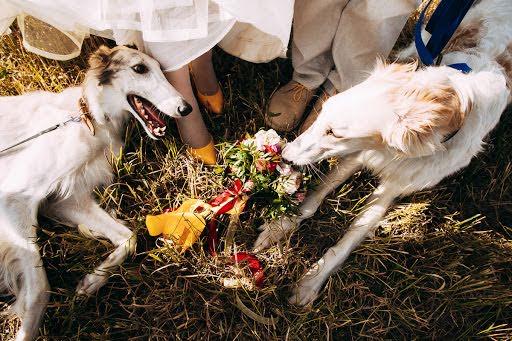 Wedding photographer Yuliya Istomina (istomina). Photo of 14.07.2016