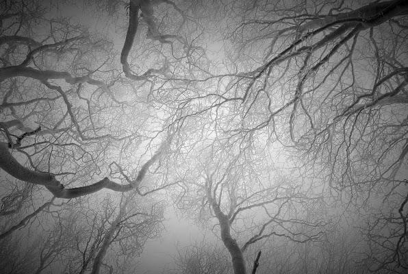 Aggroviglia i rami e spazzola i pensieri, la neve. di AlessandraPaci