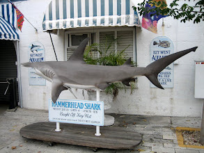 Photo: A hammerhead shark statue in front of The Key West Aquarium
