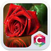 Red Rose: Best Flower Theme