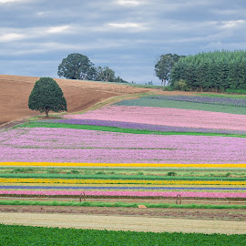 by Chris Bartell - Landscapes Prairies, Meadows & Fields ( field, oregon, seed, flowers )