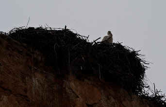 Photo: Storks didn't bring babies, they eat them...