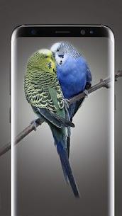 Bird Wallpapers HD 3