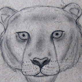 by IS Photography - Drawing All Drawing ( wild, lion, cat, wildlife, animal )