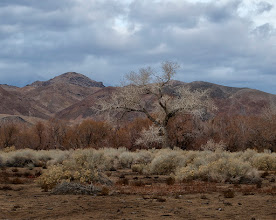 Photo: Winter at the base of the Eastern Sierras #TreeTuesday curated by +Christina Lawrie
