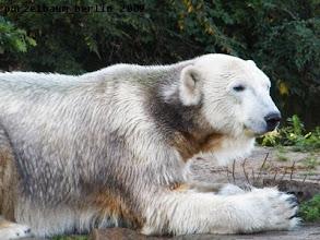 Photo: Knut goennt sich eine Pause ;-)