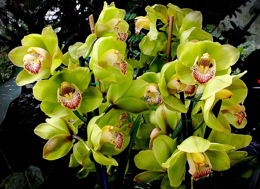 Green Orchids Bouquet by Alan Chew - Nature Up Close Flowers - 2011-2013 (  )