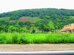 Photo: Landschaft am Main