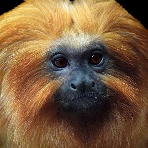 Tamarian Monkey Smile4b.jpg