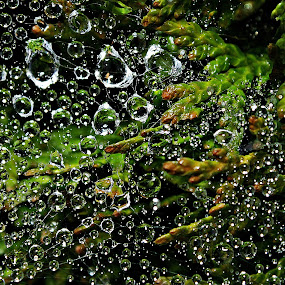 Up in the Air by Alfred Encallado - Abstract Water Drops & Splashes ( water, stranded, air, web, up, droplets,  )
