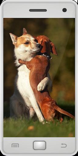 玩免費教育APP|下載小狗 app不用錢|硬是要APP