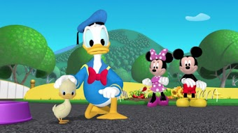 Les canards de Donald