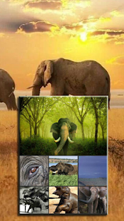 Elephant Wallpaper - Gudelplay Apps - náhled