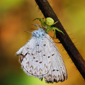 MAKAN-MAKAN by B Iwan Wijanarko - Animals Insects & Spiders