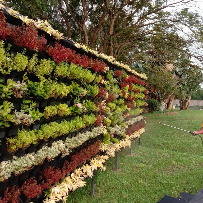 vertical garden kerala cochin ernakulam low cost l ...