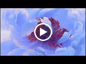 Video: Antonio Vivaldi  Teuzzone (RV 736) - II IX Aria [Zidiana]  Vedi le mie catene -